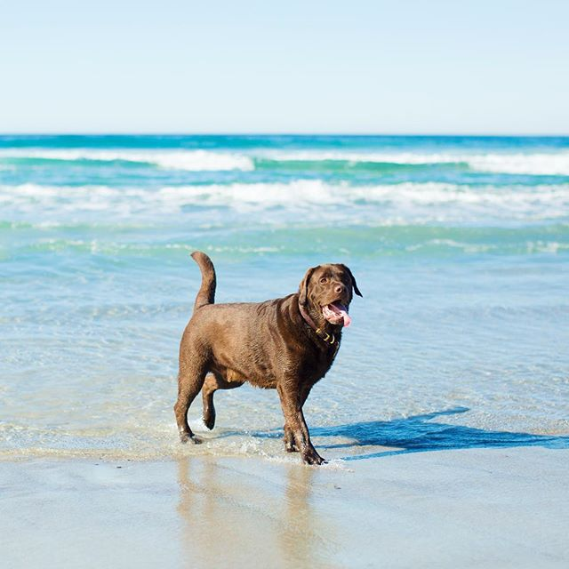 Is there anywhere better than a dog beach? #nope
