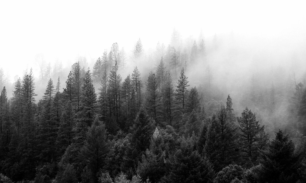bw pine 1.jpg