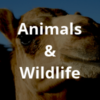 Animals-Wildlife-1.png
