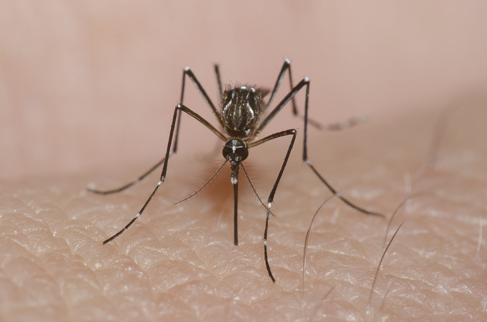 Mosquitoes The Funders Giving Big Money To Fight A Tiny Insect