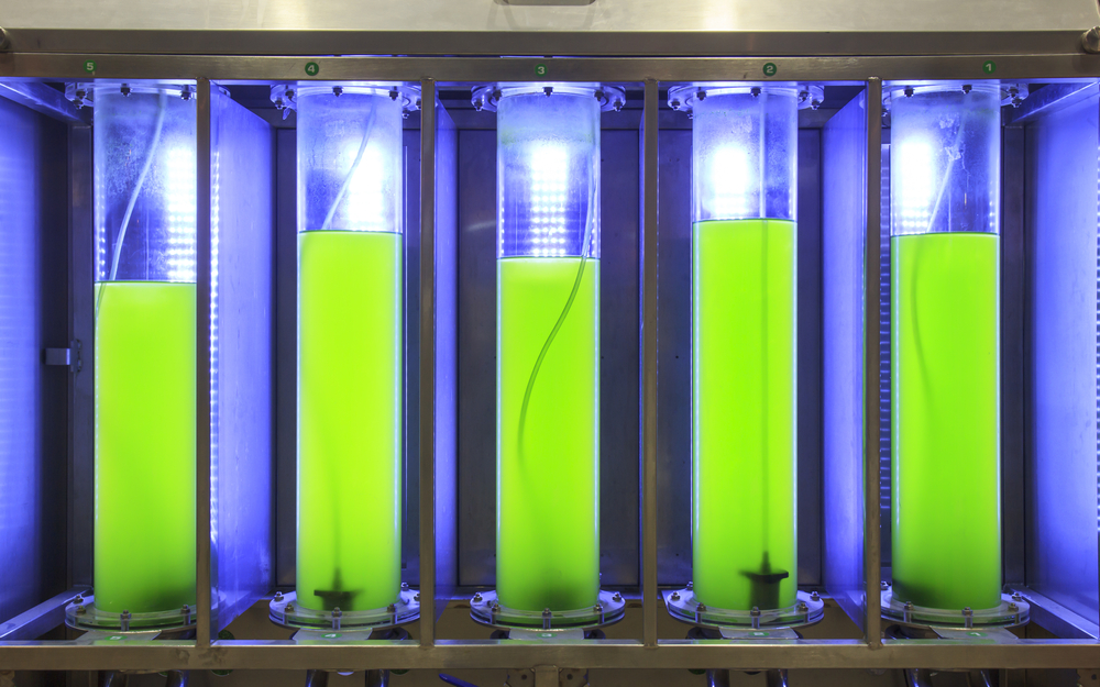 Algae biofuel research. photo: Toa55/shutterstock