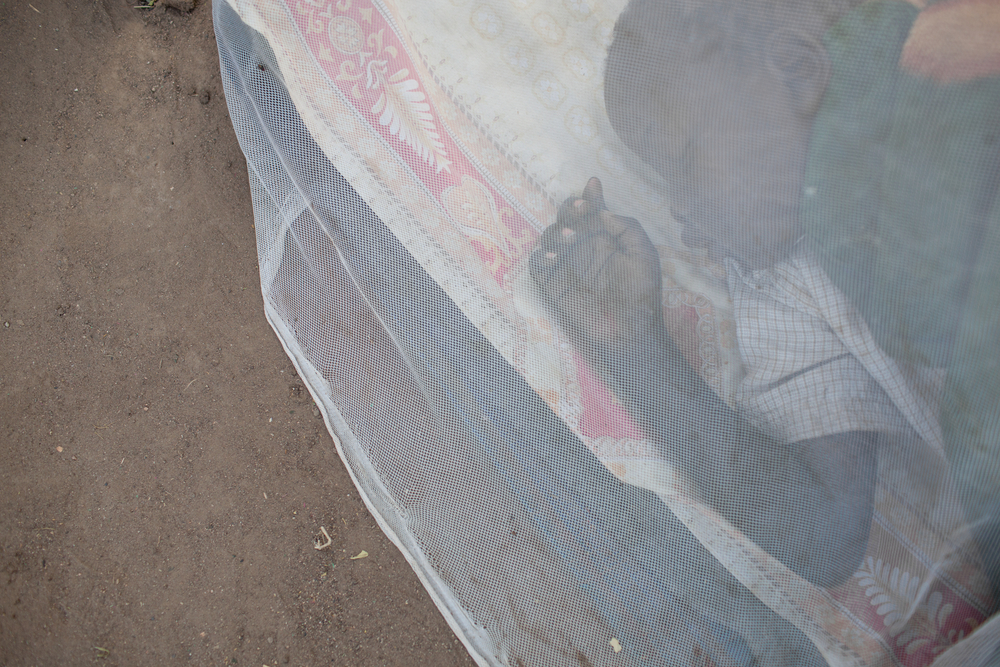 GiveWell has promoted donations for anti-malaria bednets, among other causes. photo:  punghi/shutterstock