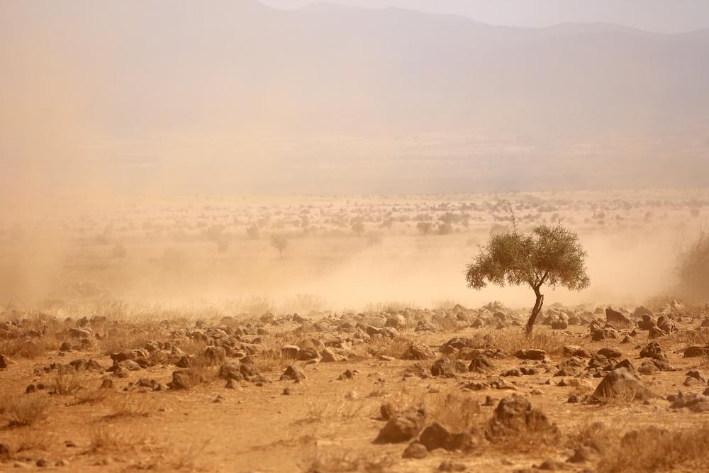 Drought stricken land in kenya. photo:EcoPrint/shutterstock