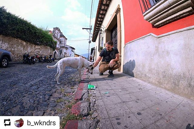 "#Repost @b_wkndrs @moosejawmadness  We're at a loss of words for the post. Thank you ... Sin palabras por la publicación. Gracias. • • • Meet @ukulele_danielu from Antigua Guatemala. Saw him in the distance feeding a stray dog. I ran up to ask if I could take a picture of them and expressed how I loved seeing him take care of the dog. Turns out ""Blanca"" is sweet on him and visits him often, and he always gives her some love and attention. We introduced ourselves and shared where we're from and what we do. His best friend and him, own a bar @summu_hummus @ilegalantigua in Antigua; a beautiful city in Guatemala. We began to part ways and I caught up with my own friends I was traveling with and told them about @ukulele_danielu .I convinced them to check out his spot and we ran to catch up to Danny to walk with him to his bar. What we ended up getting was probably the best few nights of our trip hanging out with you and the rest of @summu_hummus You guys welcomed us with open arms. @ukulele_danielu makes some bad ass Hummus and fresh Pita Bread for @summu_hummus. Go visit him and try his Cilantro Lime Hummus! They sell them by the jar or you can eat them with their special Cuba Libre. @ukulele_danielu Thank you for sharing your story with me and taking such great care of my friends and I. #guatemla #antigua #elilegal #moosejaw #hummus #summuhummus #bar #dogsofinstgram #dog #traveling"