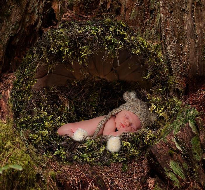 basket-moss-stumps-download-cropped.jpg
