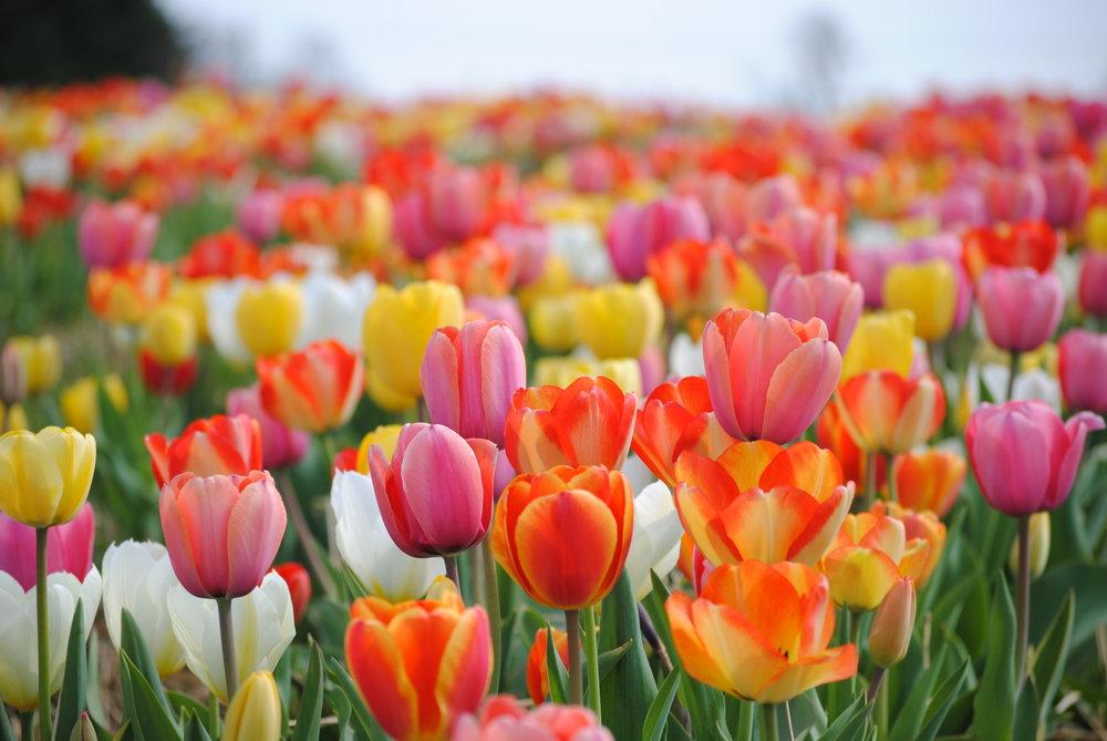 Spring Savings Extravaganza