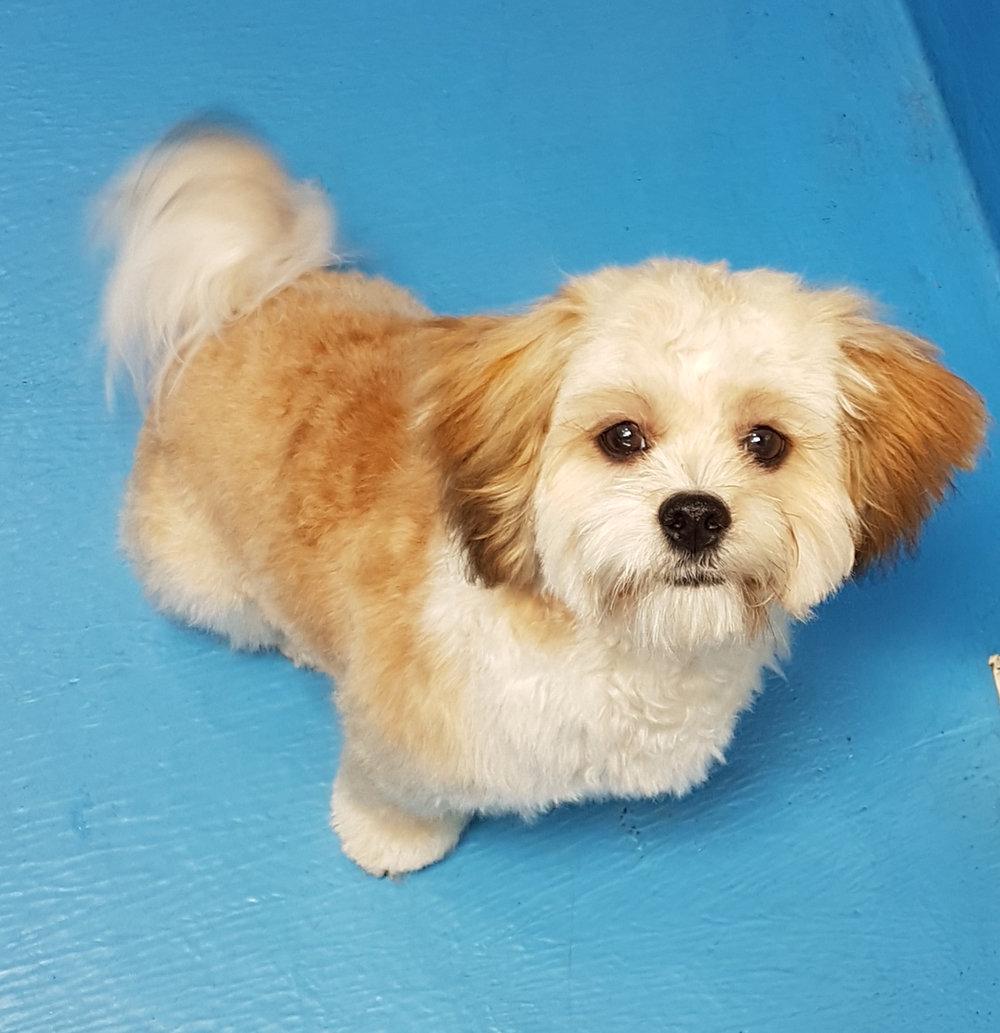 groomed-dog.jpg