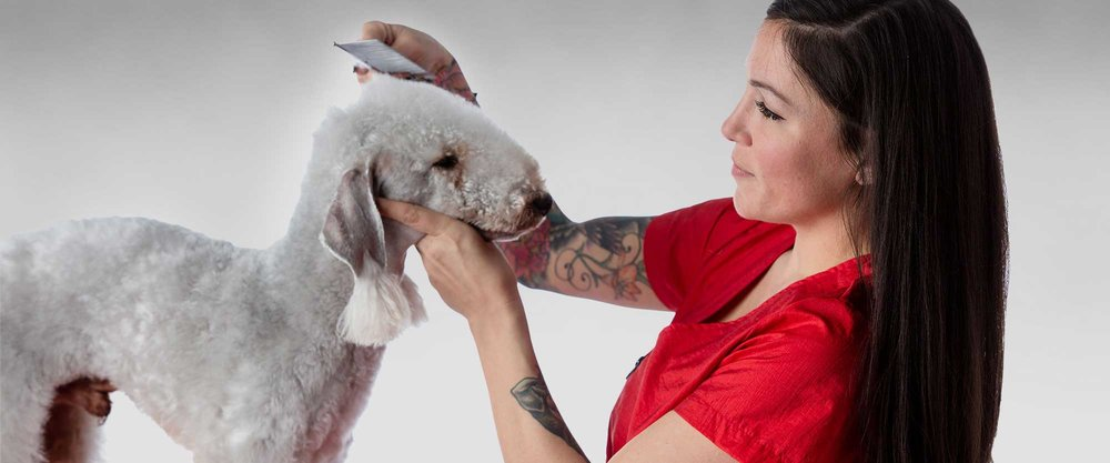 Learn to Groom with Precision