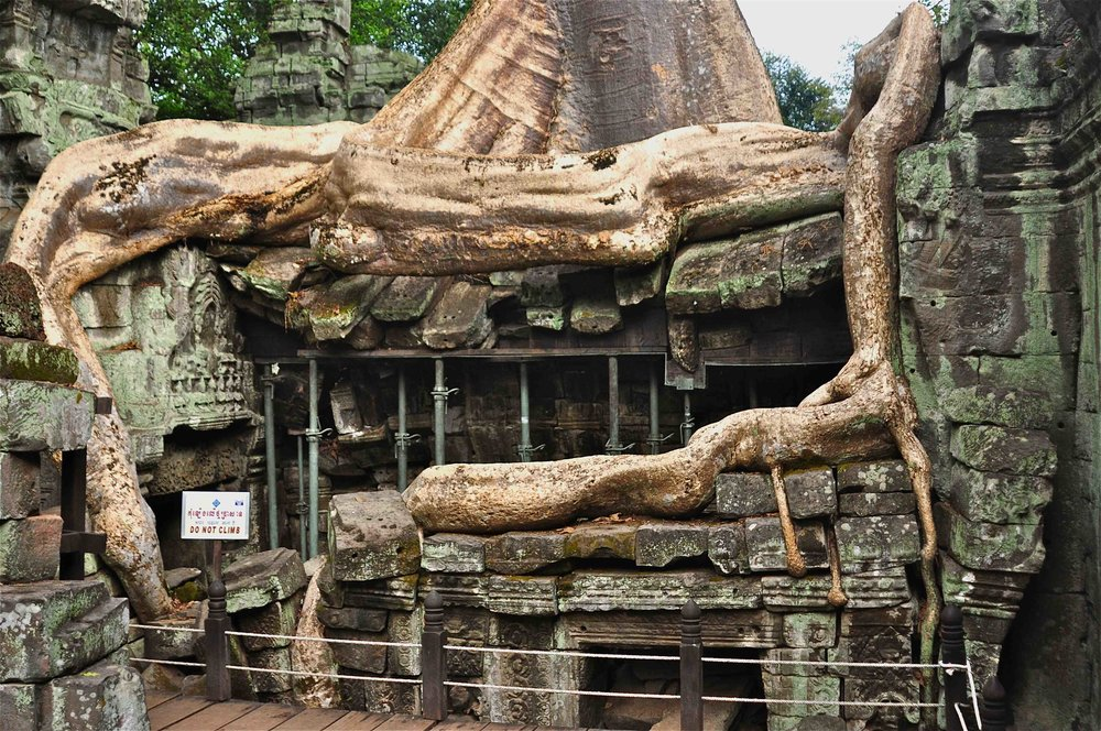 tree cambodia 2.jpeg