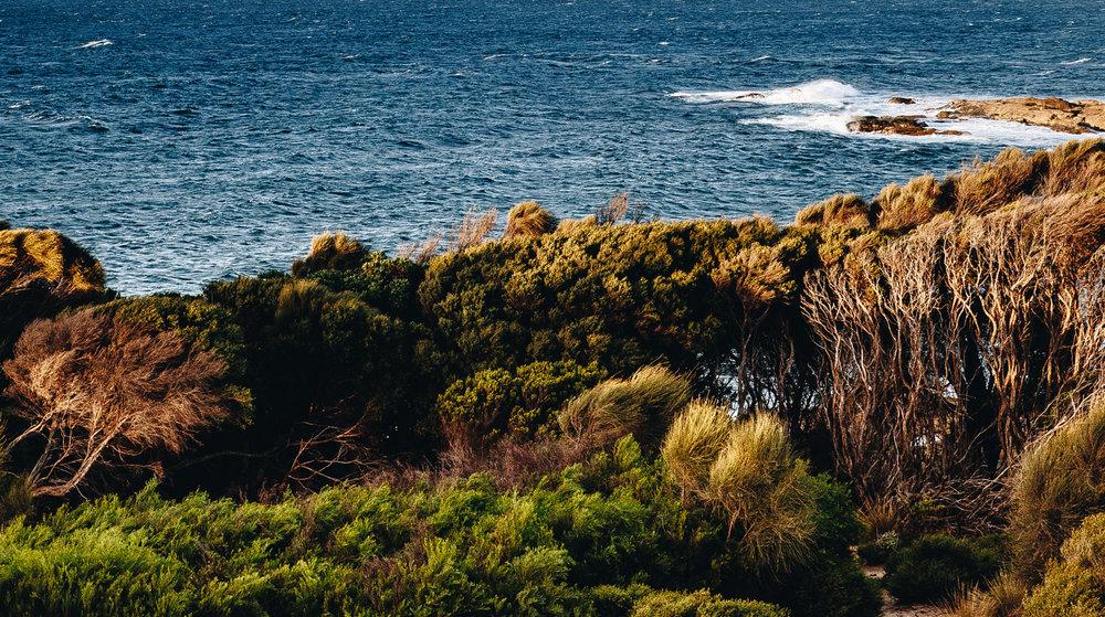 Flinders Island 1.jpg