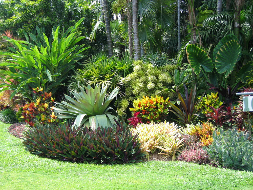 Orchidman florida for Landscaping plants pictures and names