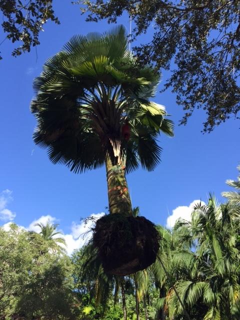 Orchidman Florida