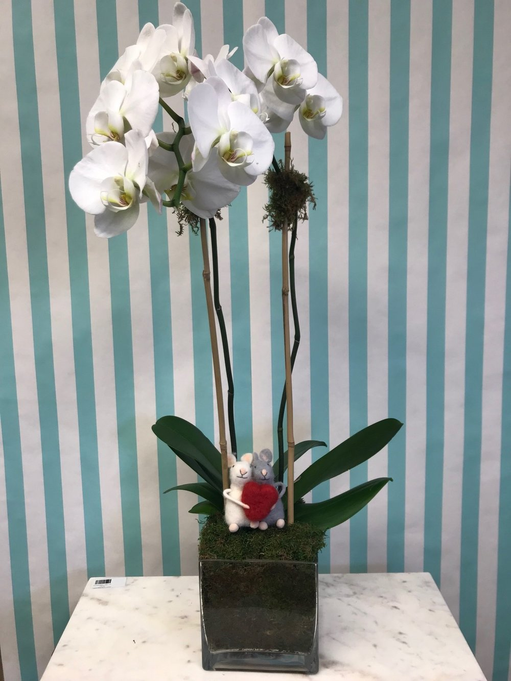 Double Orchid Arrangement- $140   1 double stem square with felt mice embellishment in a 6x6 vase.