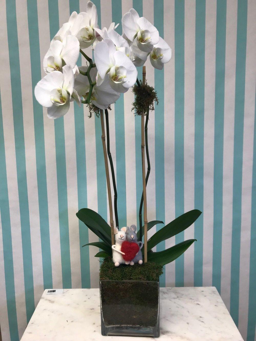 Double Orchid Arrangement- $140   1 double stem square with felt mice embellishment in a 6x6 vase.
