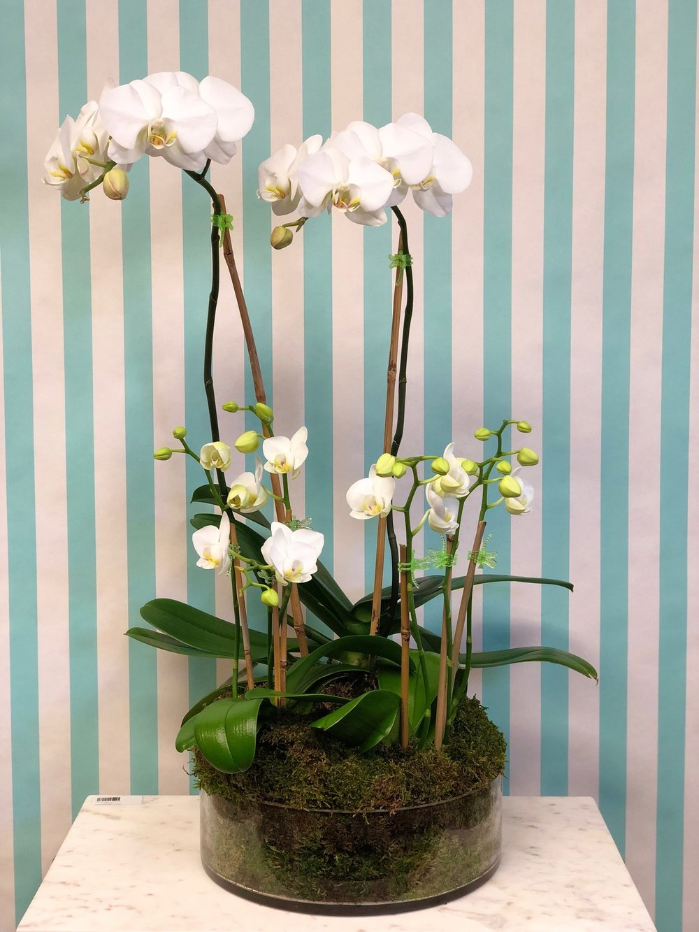 Large Orchid Arrangement- $250   1 double stem and two mini orchids in a low circle centerpiece.