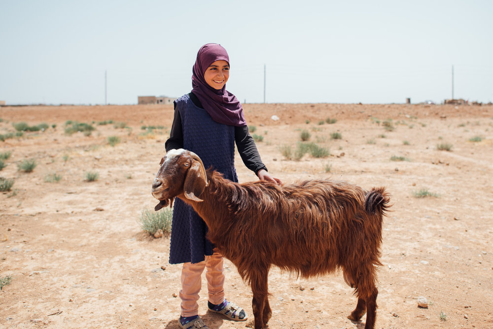 Buy a milk goat for a refugee family -