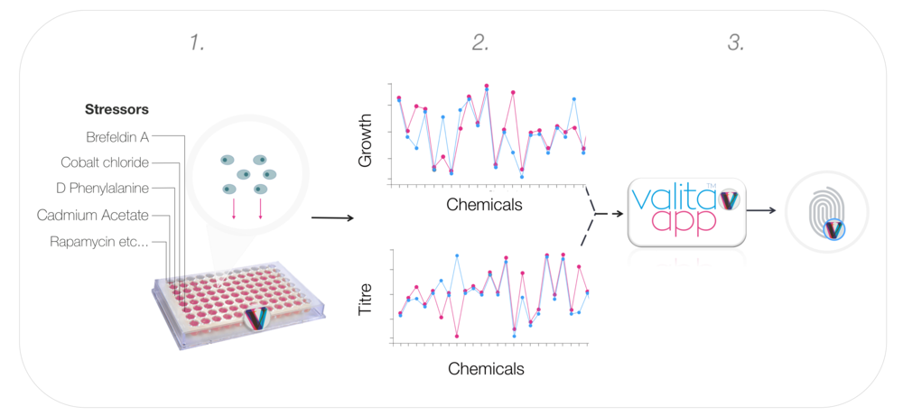 1) An individual cell clone is grown in the ChemStress plate for 3 days and exposed to the numerous small molecule chemicals   2) A clones growth and productivity are measured on a plate reader 3) ValitaAPP software applies product-specific algorithms to analyse the growth and titre data and a ChemStress fingerprint is generated.