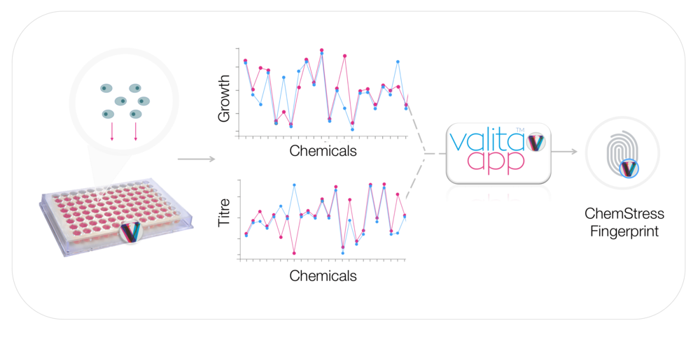 1) An individual cell clone is grown in the ChemStress plate for 3 d  ays and exposed to the numerous small molecule chemicals 2) A clones growth and productivity are measured on a plate reader 3) ValitaAPP software applies product-specific algorithms to analyse the growth and titre data and a ChemStress fingerprint is generated.
