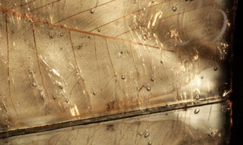 Laminated botanical Glass G014