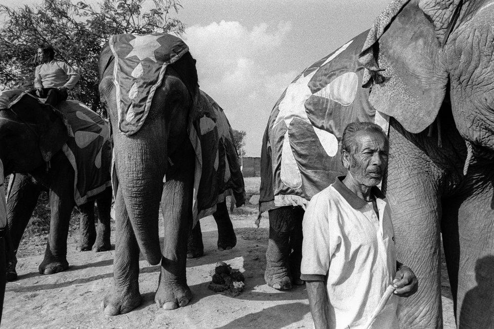 Indian_Circus_VivekM-12.jpg