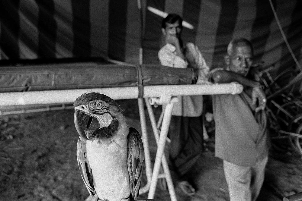 Indian_Circus_VivekM-15.jpg