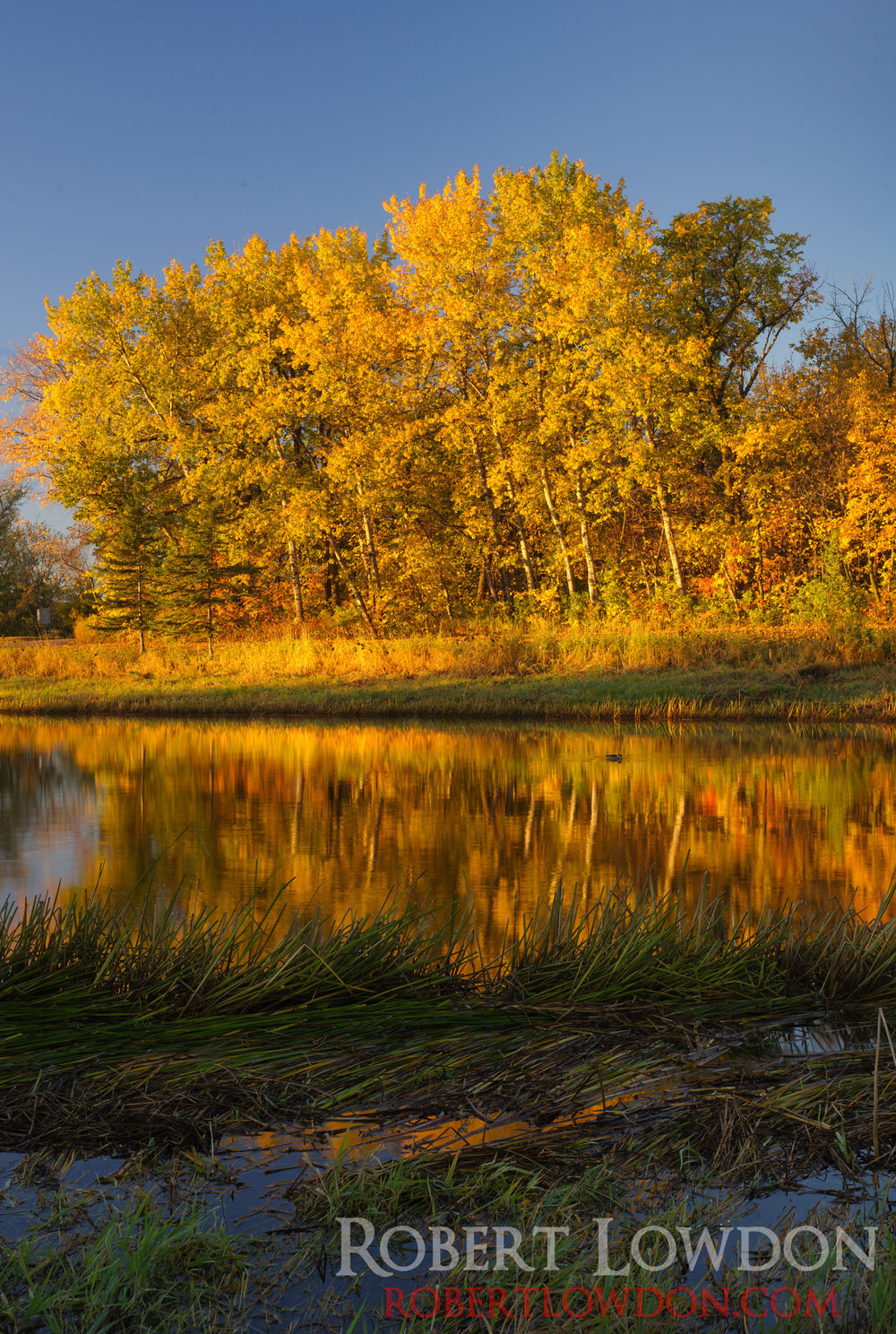 By: Robert Lowdon     Back in the Office.    Fall  landscape photograph  taken at Kings Park in Winnipeg MB.
