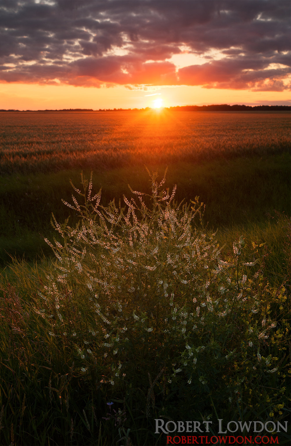 Field of Sun By: Robert Lowdon Photograph of the sun setting near Oakville, MB