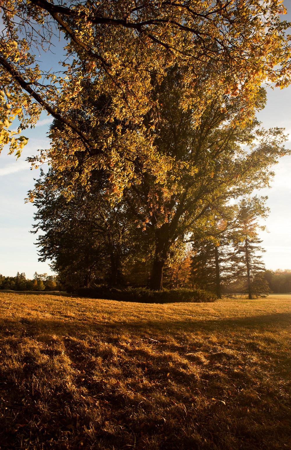 Fall.      By: Robert Lowdon     The beginning of Fall as the leaves turn in Winnipeg, MB.