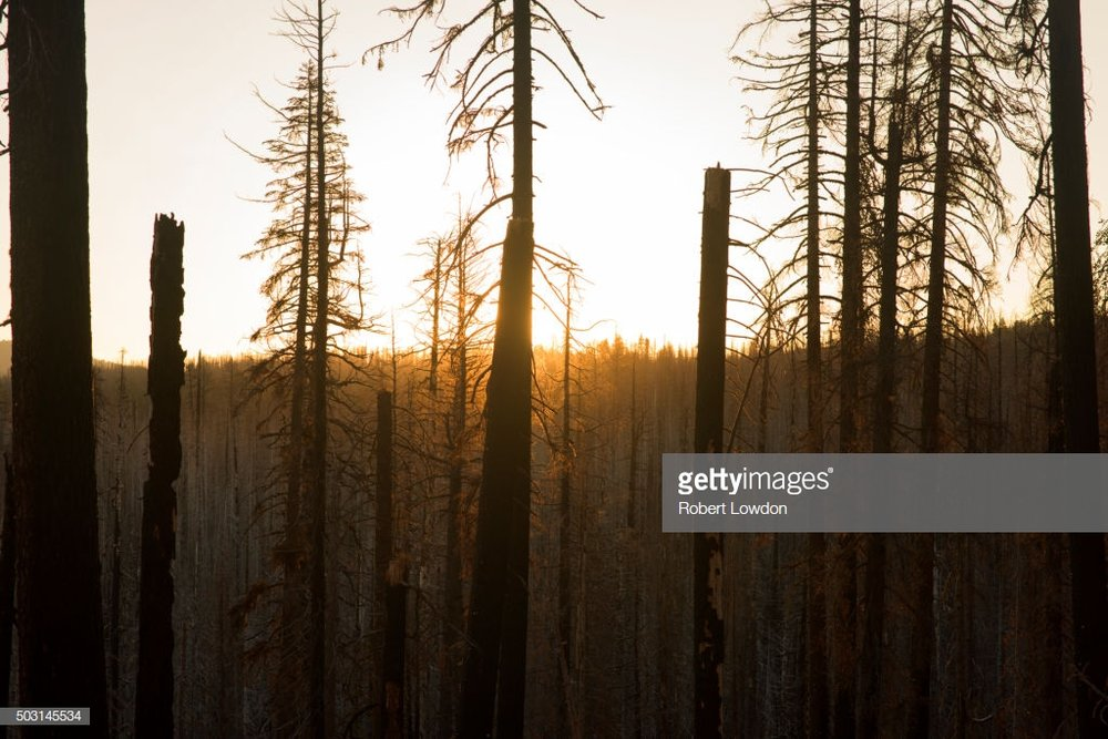 The devastated area, availible on Getty Images © Robert Lowdon