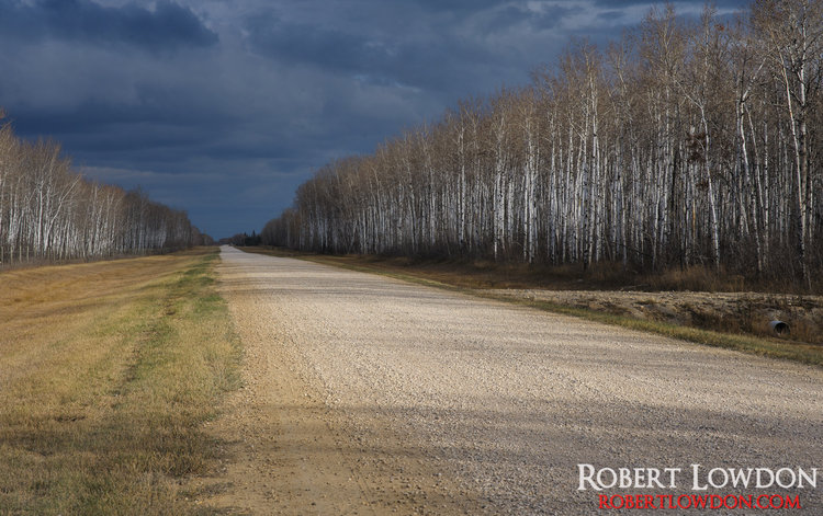 Always be prepared. I had traveled out Anola, to photograph some real estate for a client. On my journey back I came across this great scene.  Photograph of birch trees along a country road. Image taken near Anola, Manitoba.