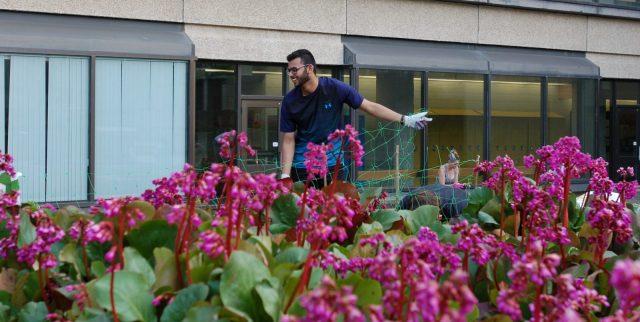 gardenning.jpg