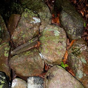 Moss Rock Cobbles