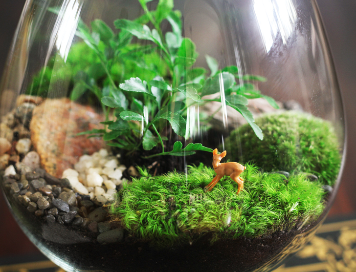 diy-how-to-make-your-own-green-terrarium-to-keep-or-give-away-for-how-to-build-a-terrarium-1.jpg