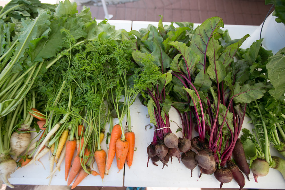 South Padre Island Farmer's Market   Every Sunday at the Shores   All Recurring Events