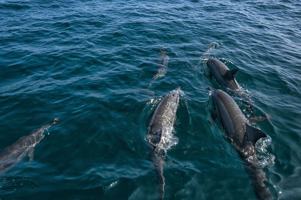 Dolphin Watching -