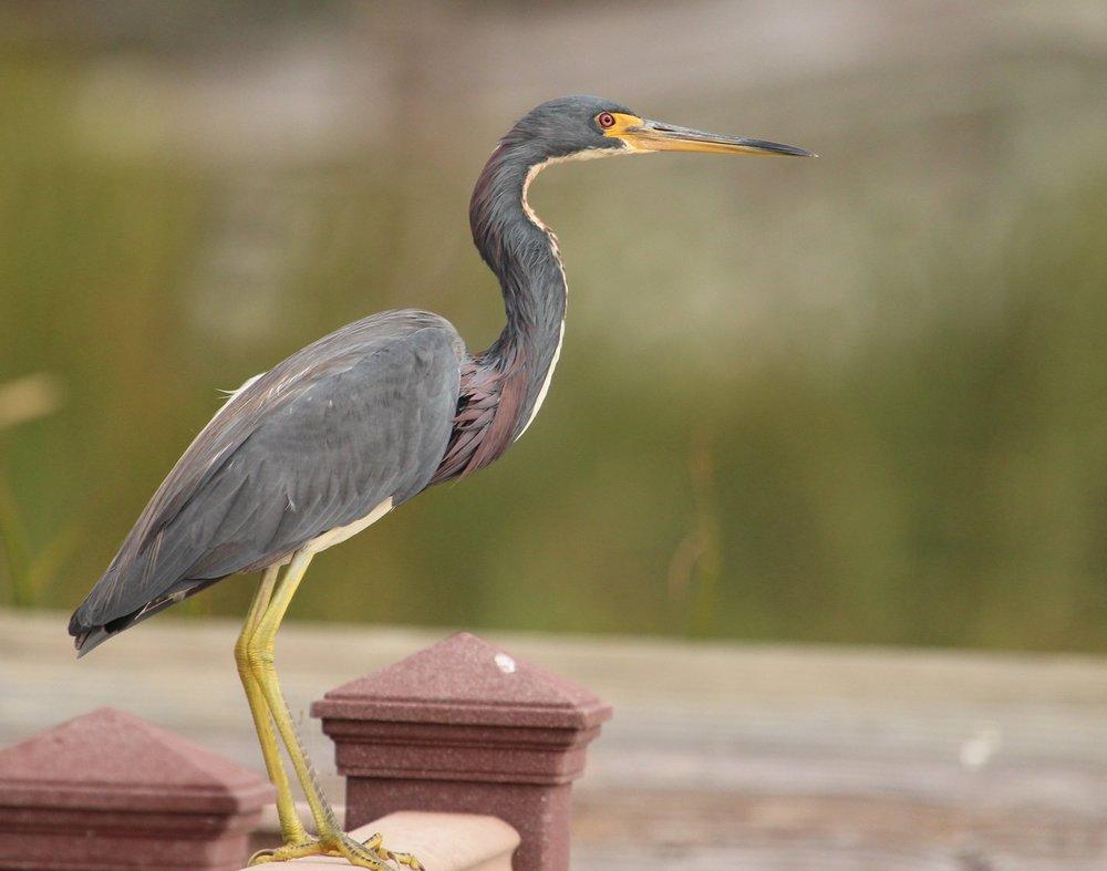 World BIRDING & NATURE CENTER - Bird and Wildlife Sanctuary