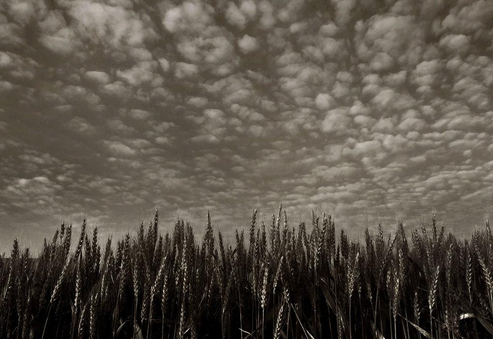 farmer-07.jpg