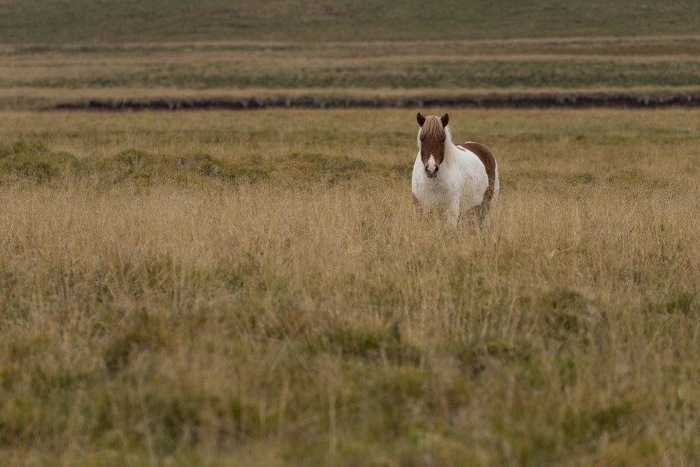 Abbildung 35 Pferd oder Pony?
