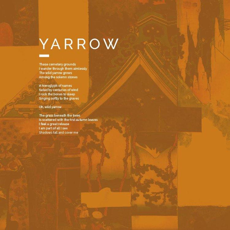 1 Yarrow.jpg