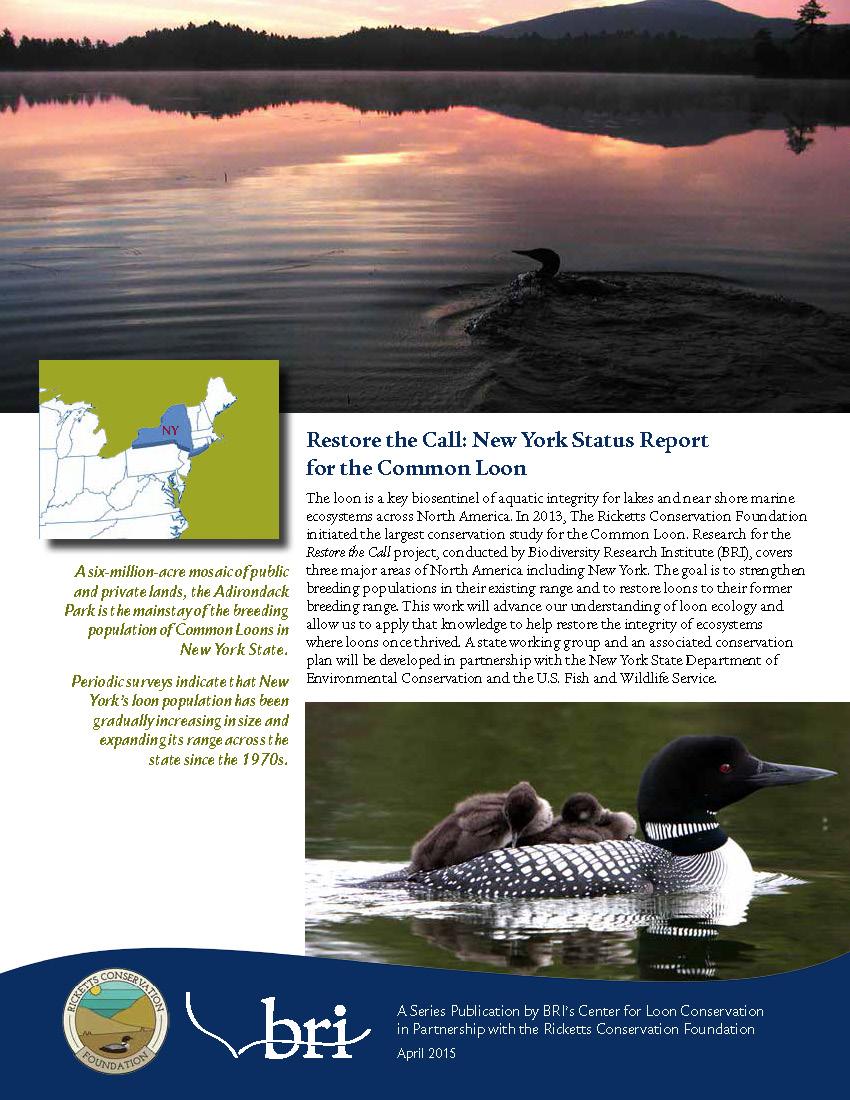 BRI-AdkLoon NY Loon Status Report-2015_Page_1.jpg