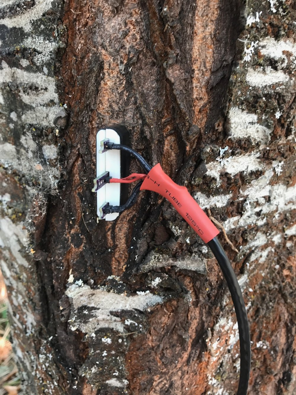 Our HRM probe prototype in the wild cherry tree! (8/16/2018)