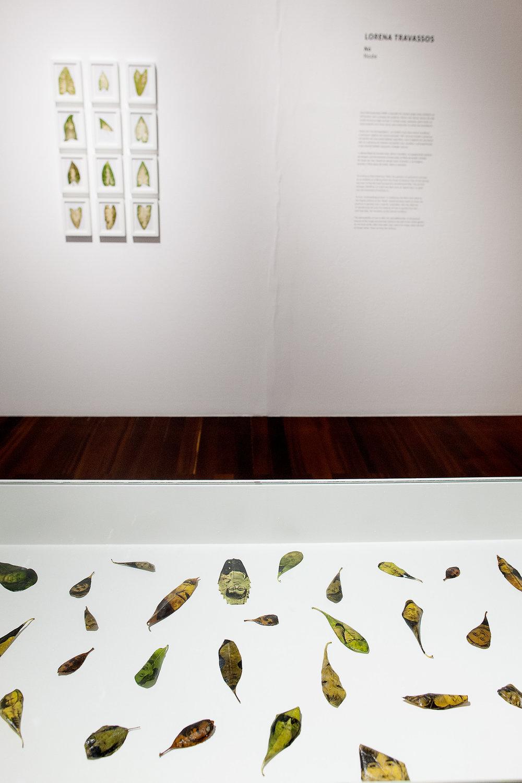 """Exposição coletiva """"Significações: outras imagens do jardim"""""""