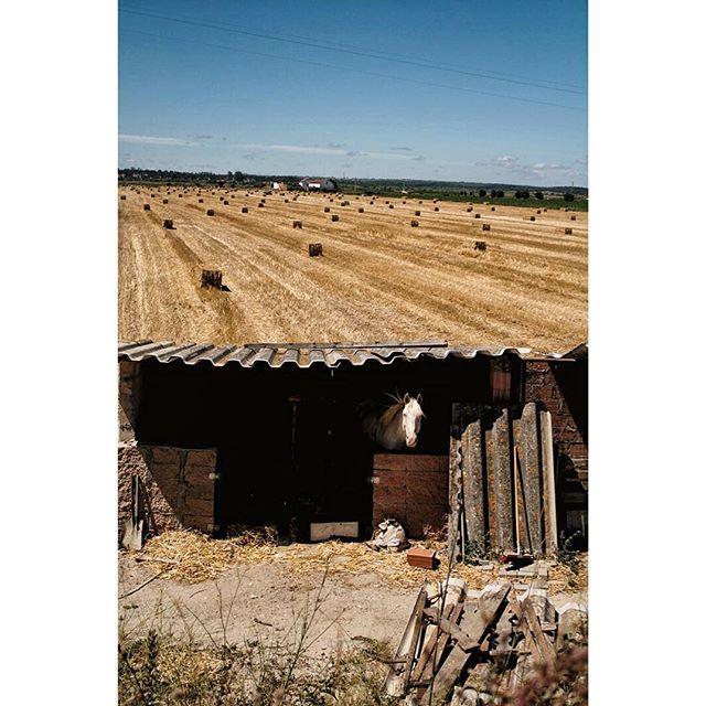 Caminho #horse #feno #peregrina #portugal #caminhodefatima #avemaria #portugal