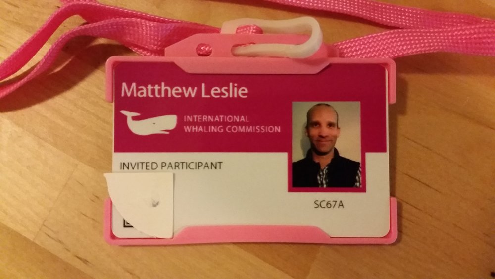 My Invited Participant Badge from the IWC in Bled, Slovenia.