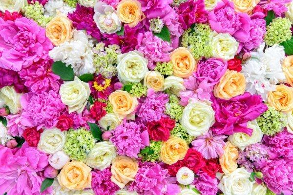 Platanthera_bifolia_(flower).jpg