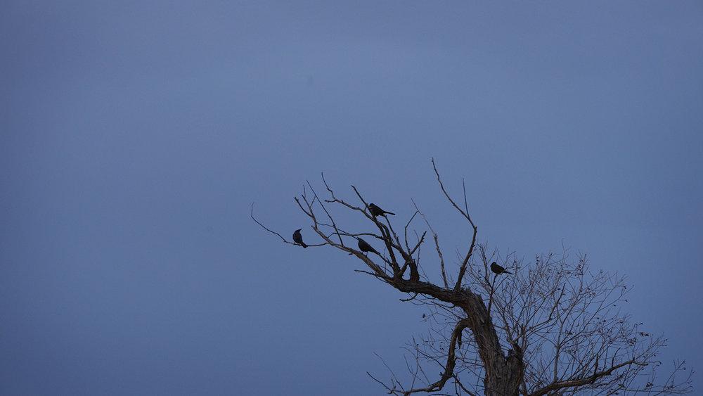 Birds in tree_MG_0352.jpg