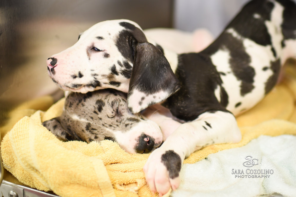 Puppies-1.jpg