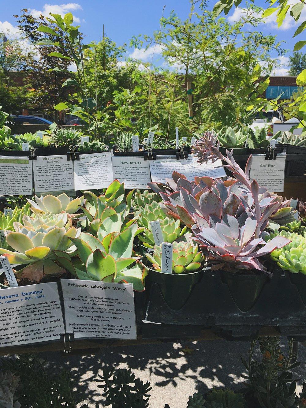 succulents_carbondale_farmers_market