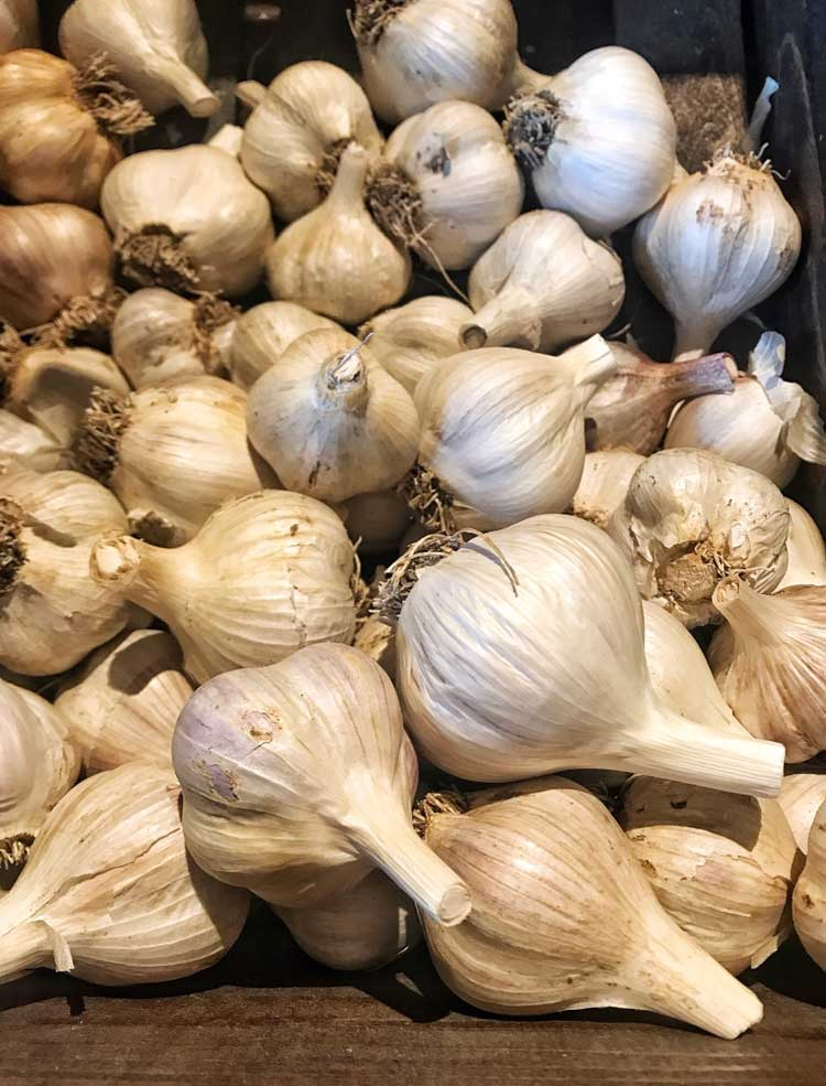 Garlic-Bulbs.jpg