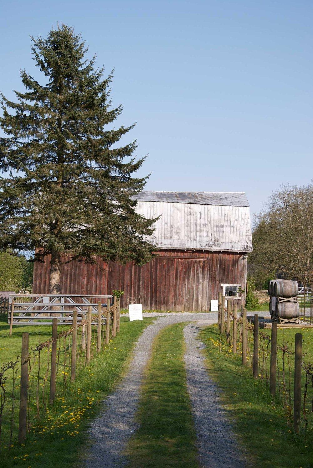 Lee-Murphy---barn-driveway'.jpg
